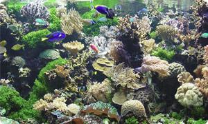 Aquaristik Zubehör günstig online kaufen
