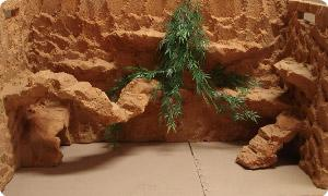 Terrarium Dekoration günstig online kaufen