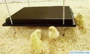 Wärmeplatte günstig online kaufen