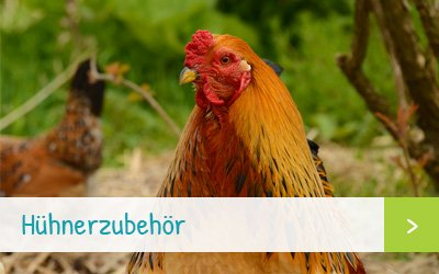 Hühnerzubehör