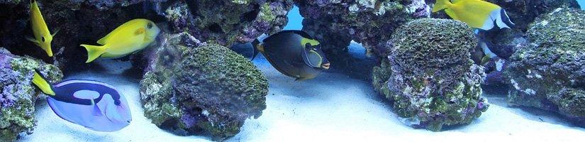 Aquaristikzubehör