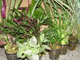 5 Topf Dekorpflanzen Mix für Paludarium, Terrarium -