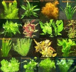 6 Bund - ca. 40 Aquariumpflanzen + Dünger, algenmindern, bunte Unterwasserwelt - Mühlan -