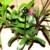 Bromelienmix 3 verschiedene Bromelien für Terrarien und Paludarien, Bromelie -