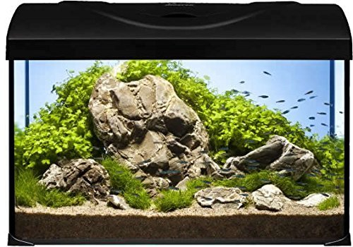 Diversa aquarium 50er komplett set 50x25x30 cm rechteck for Teichfische schwarz