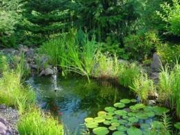 Einsteiger Teichset, ca. 50 Teichpflanzen, 10 Sorten -