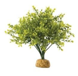 Exo Terra Buchsbaum -