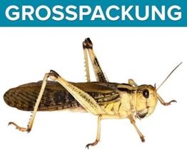 Heuschrecken groß adult 50 Stück Wanderheuschrecken Futterinsekten Reptilienfutter -