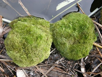Mühlan - 5 x winterharter Teichrasen, jede Matte mind. 5x7 cm, Gegen Algen und Schmutz, Unterwassergras, Moos, Begrünung des Teichrandes, Unterwasserrasen -
