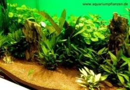 Mühlan - über 120 Aquarium-Pflanzen in 16 Bunde - großes farbiges Sortiment für 200 Liter Aquarium -