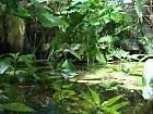Pflanzenset für Regenwald Paludarium Terrarium -