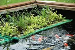 Teichpflanzen Schwimmpflanzen für Teichbepflanzung – Teich, Gartenteich durch winterharte Wasserpflanzen, Pflanzen mit Bioland Siegel verschönern -