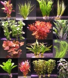 über 120 Aquarium-Pflanzen in 16 Bunde - großes buntes Sortiment für 200 Liter Aquarium -