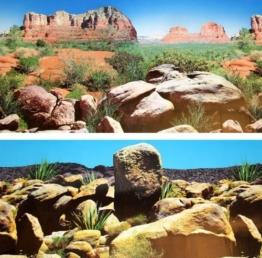 Fotorückwand 200x60 cm Reptilen Wüste Rückwand Rückwandfolie 200 60 Poster 18432 -