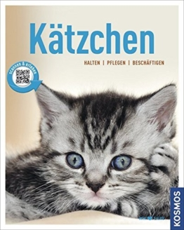 Kätzchen: halten, pflegen, beschäftigen (Mein Tier) -
