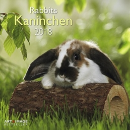 Kaninchen 2018 - Tierkalender, Kaninchen-Kalender, Hasenkalender, Haustierkalender  -  30 x 30 cm -