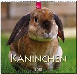 KANINCHEN: Original Stürtz-Kalender 2018 - Mittelformat-Kalender 33 x 31 cm -