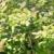 Windhager Vogelschutznetz Ortonet, 10 x 4m; schwarz; Schützt Obstbäume vor Vogelfraß -