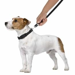 GOLEYGO Hundeleine & Halsband, schwarz, Größe S (29-43 cm Halsumfang) | innovatives Magnet-klick-System mit Kugelstift, unter Vollast lösbar | für Hunde bis max. 40 kg | Leinenlänge 120-200 cm - 1